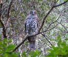powerful-owl.jpg